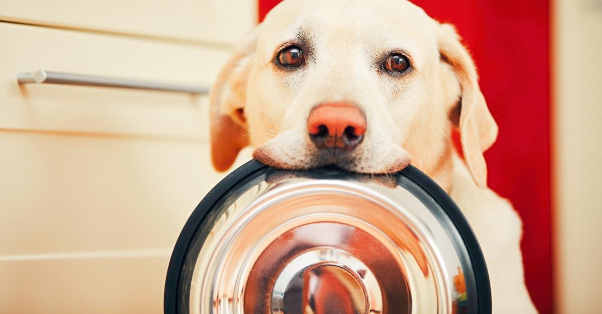 Túl sok a D-vitamin a konzerv kutyaeledelben
