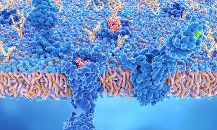 CBD: antibiotikum szuper baktériumok ellen?