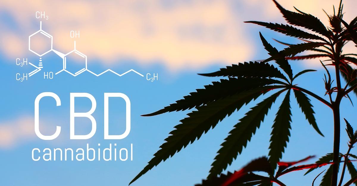 CBD a tudományos kutatások tükrében