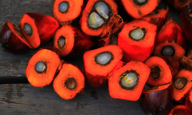 3+1 dolog, amit rosszul tudtunk a pálmaolajról