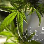 A CBD (cannabidiol), mint kiegészítő terápia
